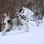 Kiara&Ghost 2,5 kuud
