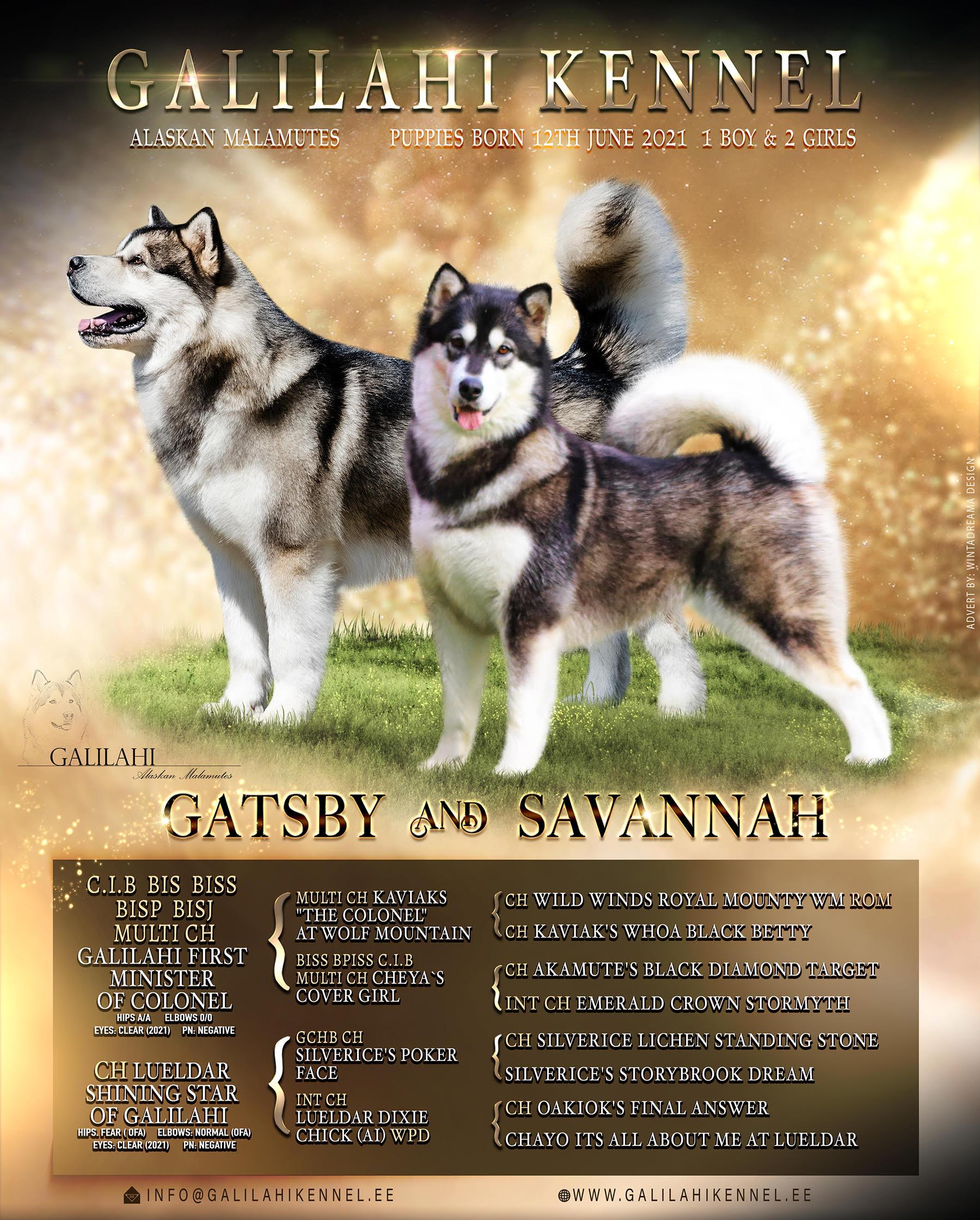 gatsvy&Savannah Poster